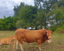 exploitation agricole - La Petite Ferme de Giles et Julie - Limoges